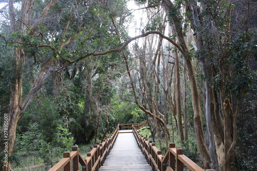 Parc national Los Arrayanes Canvas-taulu