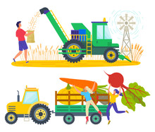 Man Working On Wheat Field Vector, Character Loading Truck With Products. Carrots And Beetroots In Carriage Of Tractor, Transportation Of Production On Farm