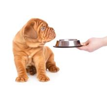 Mastiff Puppy Looking At Empty...