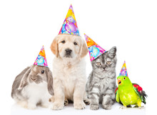 Group Of Pets With Party Hats ...