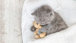 Leinwandbild Motiv Baby kitten sleeping with toy bear on the bed under blanket. Top view. Empty space for text