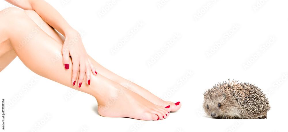 Fototapety, obrazy: Charming hedgehog near beautiful  slim female legs isolated on white background