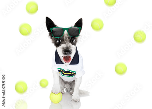 Spoed Foto op Canvas Crazy dog tennis dog with owner and ball