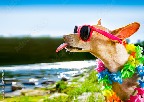 Spoed Foto op Canvas Crazy dog beach summer vacation dog