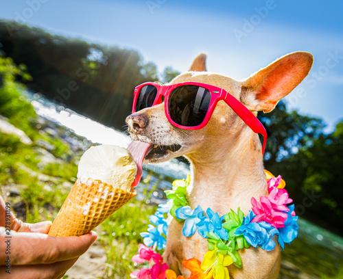 Ingelijste posters Crazy dog dog summer vacation licking ice cream