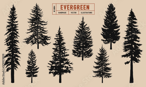 Fotografia Evergreen tree silhouette vector illustration hand drawn