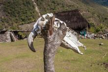 Aged Animal Skull