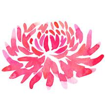 Abstract Flower Pink Chrysanthemum Dahlia