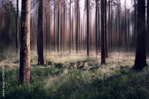 Surrealer Wald mit unscharfen Hintergrund Wallpaper Mural