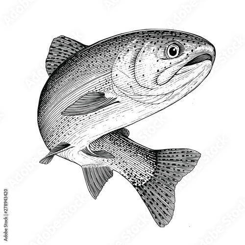 Leaping Rainbow trout isolated on white background Canvas-taulu