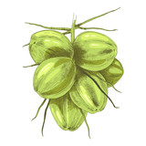 Bunch of green coconuts - 278963416