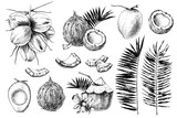 Set of hand drawn coconuts. - 278963819