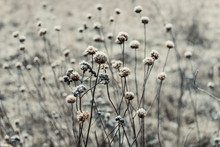 Snow Covered Plant Growing In Field