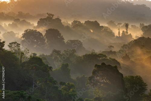Tropical Rainforest Fototapet