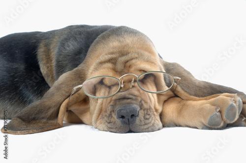 Photo Bloodhound
