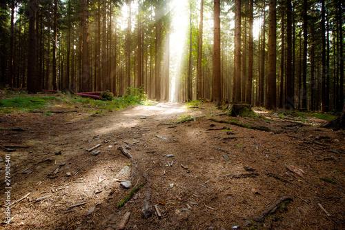 Stickers pour portes Route dans la forêt road in the forest