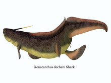 Xenacanthus Shark Tail With Font - Xenacanthus Was A Carnivorous Marine Shark That Lived In Devonian And Triassic Period Seas.