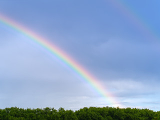 A beautiful bright rainbow forms over the forest canopy after an evening thundershower