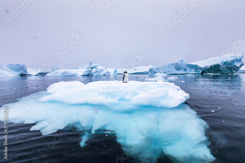 Fotobehang Pinguin Gentoo Penguin alone on iceberg in Antarctica, scenic frozen landscape with blue ice and snowfall, Antarctic Peninsula