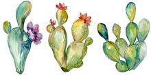 Green Cactus Floral Botanical Flowers. Watercolor Background Illustration Set. Isolated Cacti Illustration Element.