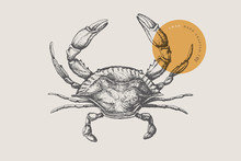 Sea Crab Drawn By Graphic Lines On A Light Background. Retro Engraving For A Menu Of Fish Restaurants, For Packaging In Markets And In Stores. Vector Vintage Illustration.