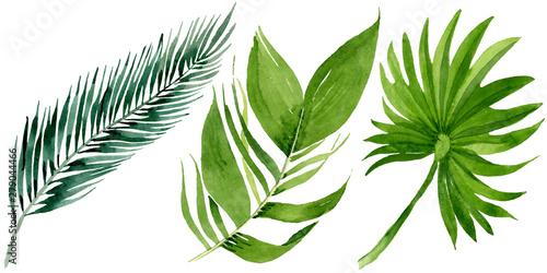 Poster Vegetal Palm beach tree leaves jungle botanical. Watercolor background illustration set. Isolated leaves illustration element.
