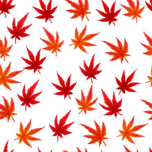 Japanese Maple Leaves Autumn H...
