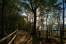 Bosque Junto A La Playa, Acantilados
