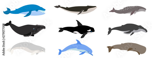 Fotografia, Obraz Whale icons set. Flat set of whale vector icons for web design