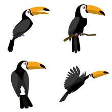 Toucan Icons Set. Flat Set Of Toucan Vector Icons For Web Design