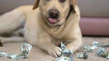 Labrador Eating Dollar Banknot...