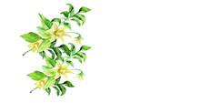 Flower Tomato  Pattern.Waterco...