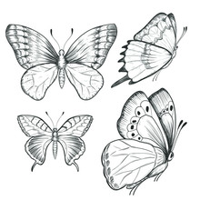 Sketch Ink Graphic Butterflies...