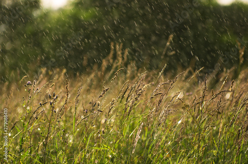 Photo Obliquely drizzling rain illuminated by sunlight over a summer meadow with field