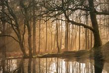 Beautiful Landscape Image Of S...