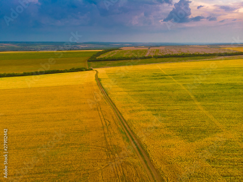 Tuinposter Zwavel geel Top down view of fields with various types of agriculture. Beautiful lavender fields.