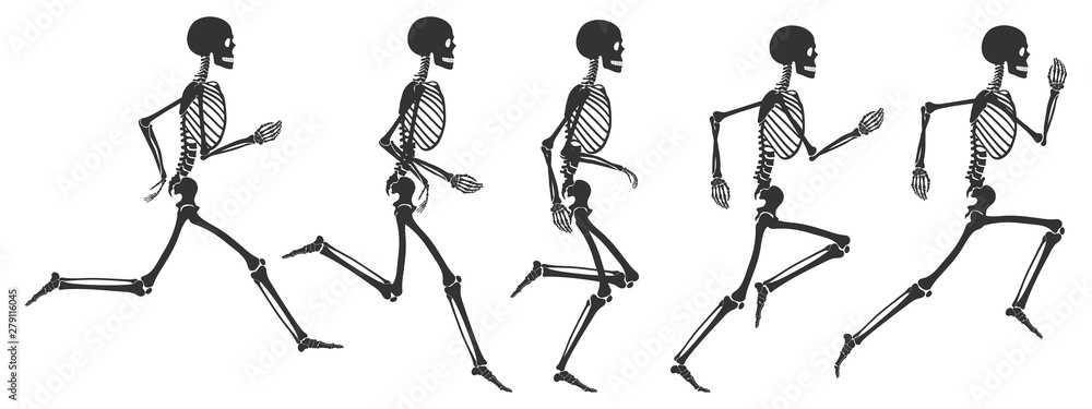 Fototapeta Five phases of running human skeleton. Black skeleton silhouettes isolated on white background. Vector illustration in flat style