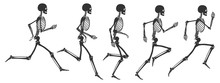 Five Phases Of Running Human S...