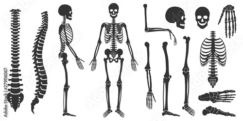 Fotografia, Obraz Set of black silhouettes of skeletal human bones isolated on white background