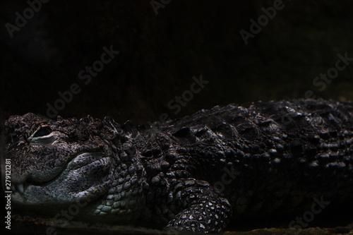 Poster Crocodile Crocodile close-up dark shot