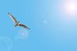 Leinwandbild Motiv Eine Moewe im Flug
