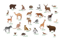 Set Of Animals. Armadillo Camel Deer Echidna Impala Numbat Okapi Quoll Raccoon Urial Vole Weasel Xerus Lemur Zebra Hare