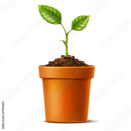 Obraz na płótnie Vector 3d green seedling grows in soil ceramic pot