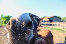 A Donkey Face Near The Camera