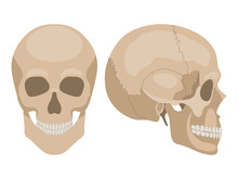 Human Skull In Profile And In ...