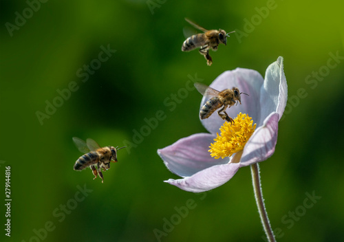 Photo The panoramic view the garden flower and bees