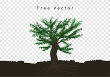 Big Pine Trees Spread Their Roots, Branched In The Soil, Tree Vector Isolated On Transparency Background