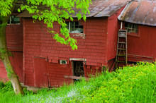 Falling Down Red Barn In Surro...
