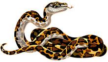 Cartoon Python Big Snake. Boa Constrictor Isolated On White. Vector Illustration