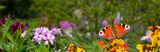 Schmetterling 573